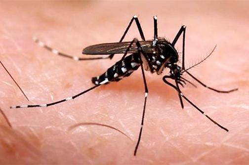 Las claves para no contagiarse del chikungunya en Semana Santa