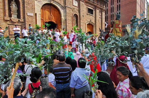 Autoridades hacen llamado para no usar palma de cera en Domingo de Ramos