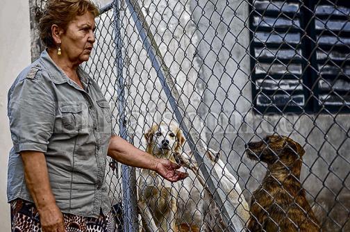 Preocupación por falta de juntas protectoras de animales en el norte del Valle