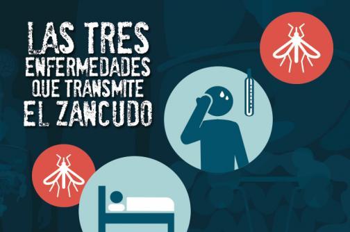 Gráfico: ¿Zika, Chikunguña o Dengue?, la guía básica para diferenciarlas