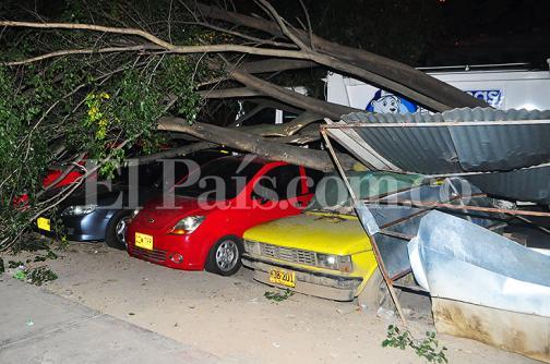 En fotos: árbol se derrumbó y cayó sobre ocho vehículos en el oriente de Cali