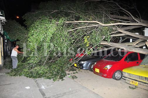 Video: árbol cae sobre ocho vehículos en el oriente de Cali
