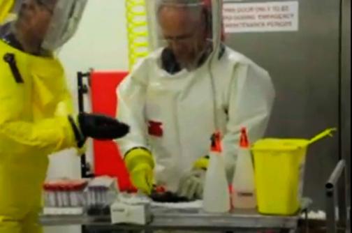 Video: investigación en murciélagos, esperanza para hallar vacuna contra el ébola