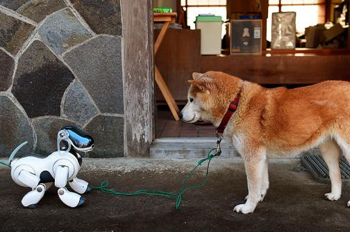 Video: ¿Los perros robots pueden ser la mascota perfecta?