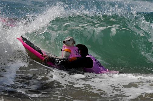 Torneo de surf para perros, en California
