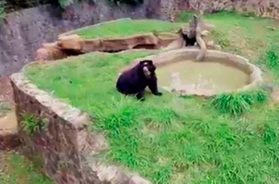 Cali desde el aire: tour por el Zoológico de Cali, el lugar más mágico de la ciudad