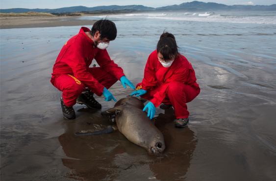 Naturaleza muerta: impactantes imágenes de la tragedia ecológica en Chiloé