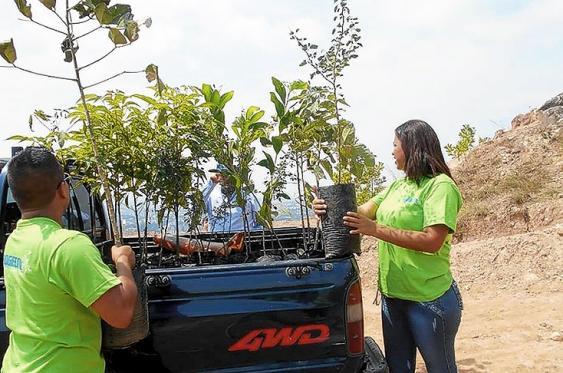 Progecol, en alianza con la CVC, también ha sembrado árboles para contribuir con el pulmón verde de Cali.<br>