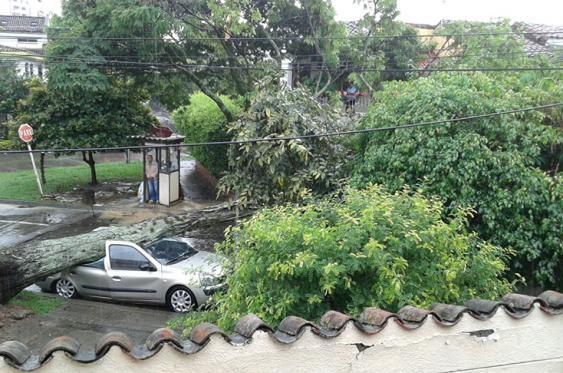 Por el fuerte aguacero árbol cayó encima de un vehículo en el barrio Nueva Tequedama al sur de Cali. <br>Foto:  Paula Ramos